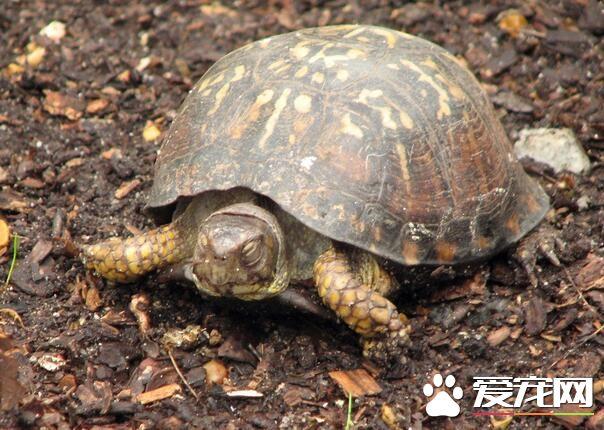 乌龟死了怎么处理 建议还是做火化的处理